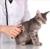 Ветеринарные клиники в Зубцове